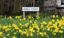 Thriplow Daffodil Weekend