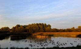 Out & About RSPB Fowlmere