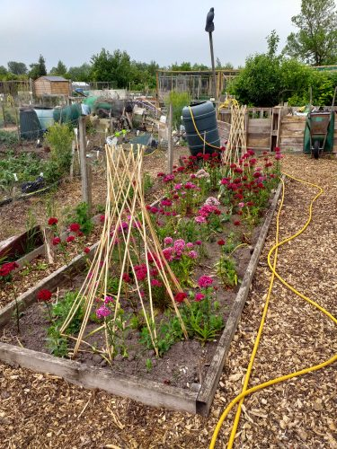 Spotlight On… Melbourn Community Allotment