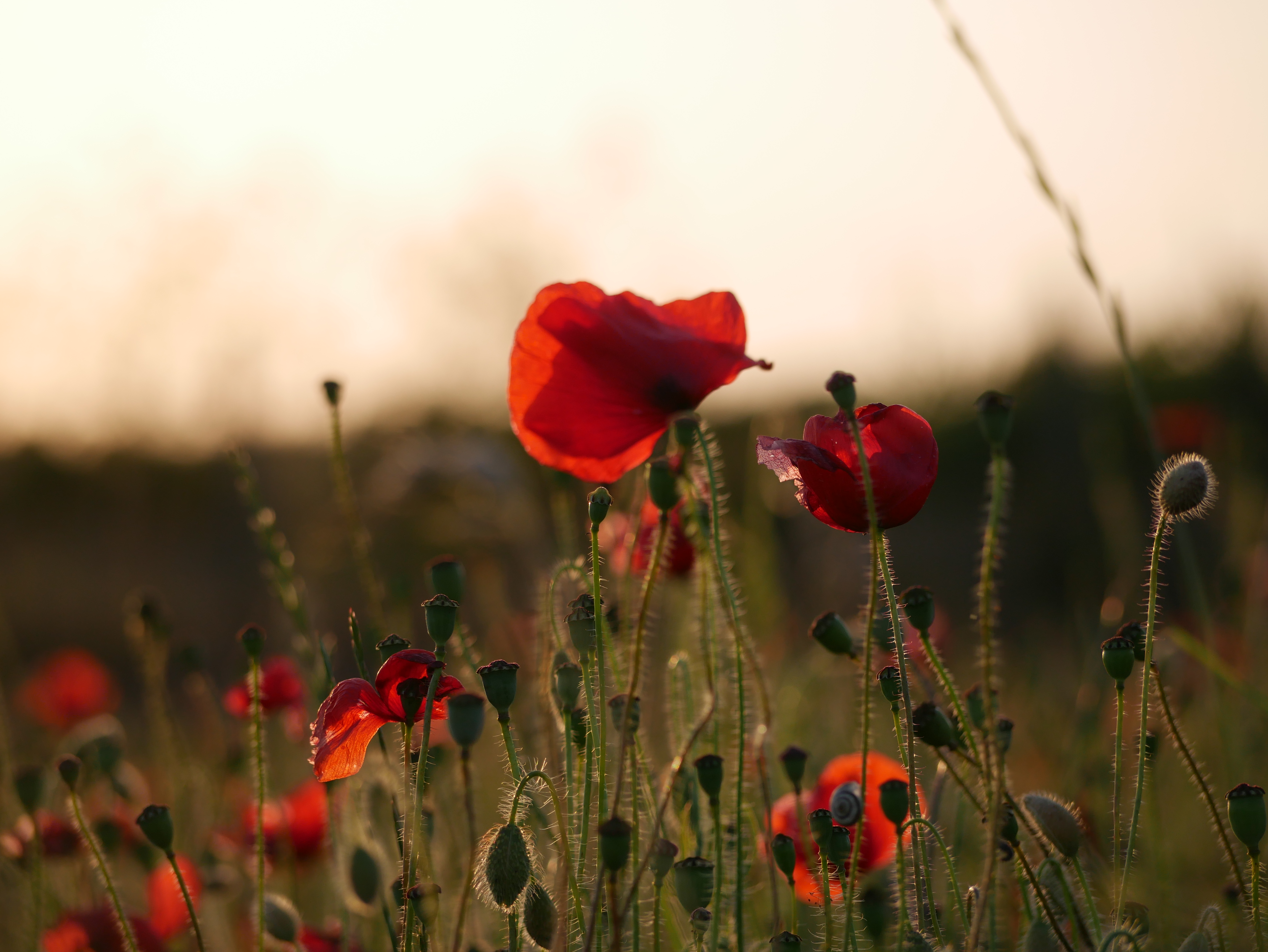 Out & About: Remembrance 2020