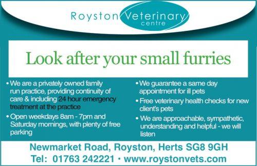 Royston Vets: Keep rabbits safe from Flystrike